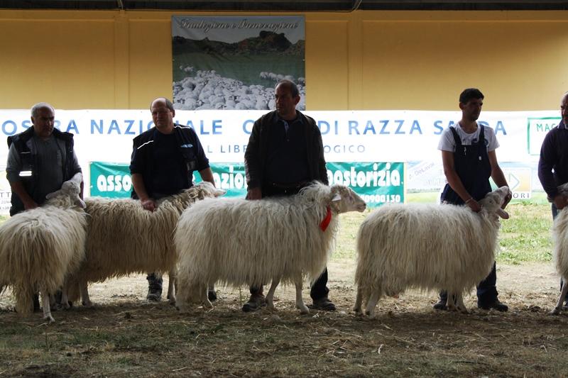 Un'edizione della Mostra degli ovini di razza sarda a Macomer