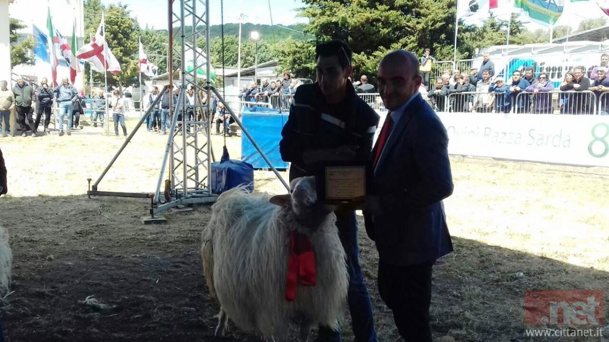 Renato Pitzalis, vincitore per il secondo anno consecutivo della Mostra Nazionale degli ovini di razza sarda