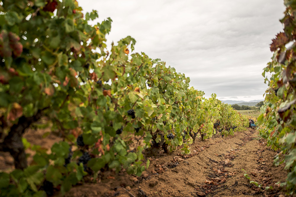 foto Fradiles vitivinicola